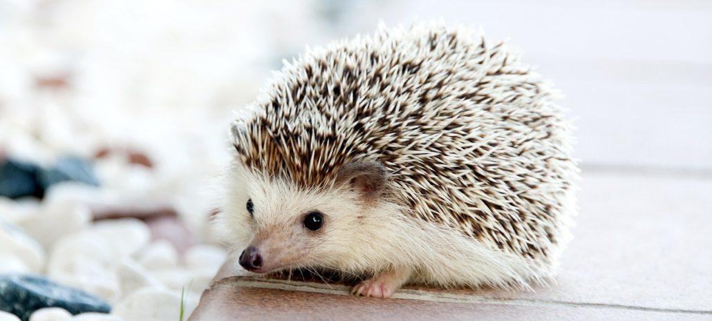 Igel Sind Nicht Nur Niedliche Tierchen Sondern Auch Individuelle